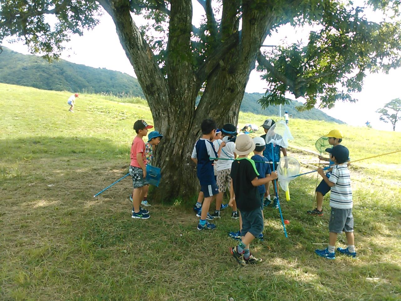 キャンプ三日目・山遊び10